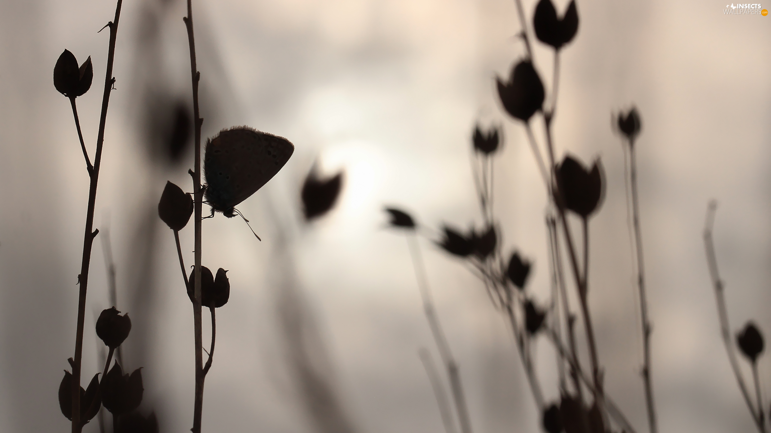 evening, butterfly, Plants
