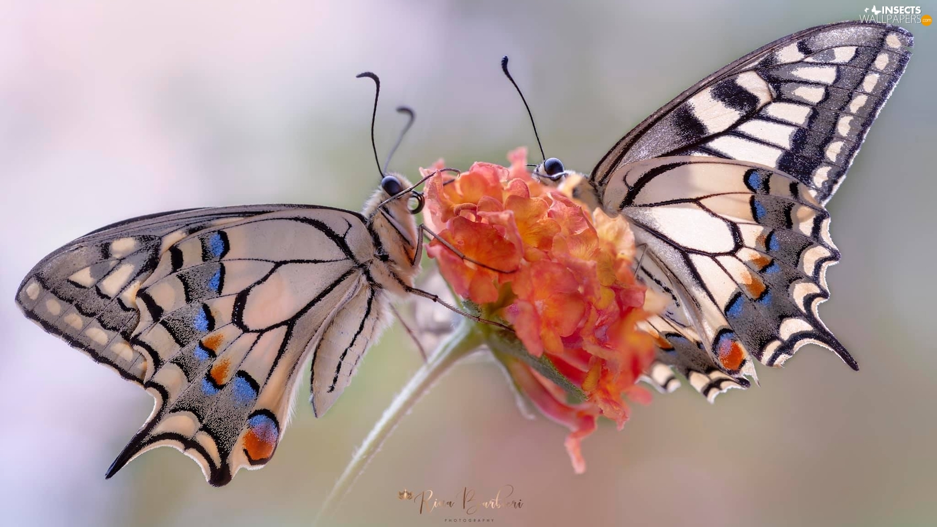 butterflies, Colourfull Flowers, Close, Oct Queen