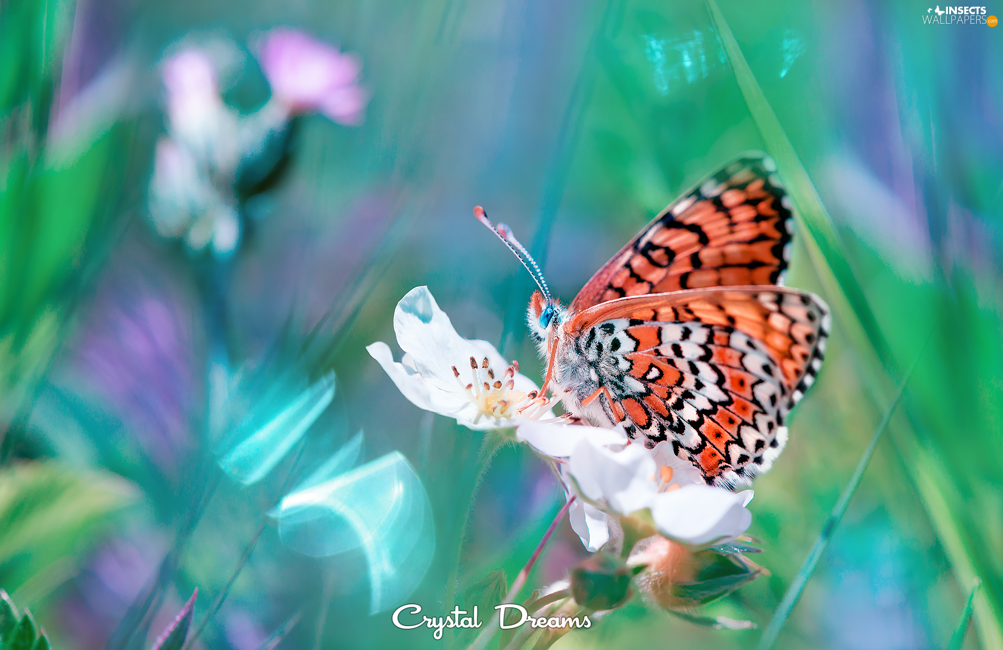 butterfly, Colourfull Flowers, Close, White