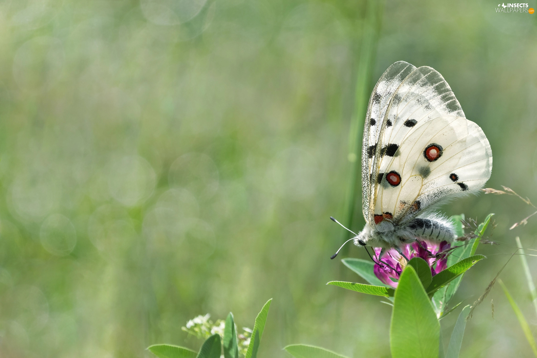 fuzzy, background, butterfly, Colourfull Flowers, White