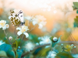 snail, blurry background, butterfly, Bielinek Rukiewnik, Flowers