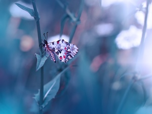 butterfly, fuzzy, background, stalk