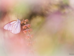 plant, Black-veined White, butterfly