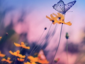 blur, butterfly, Flowers