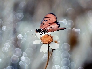 Close, Flower, butterfly, White