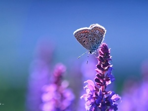 Colourfull Flowers, Dusky, butterfly