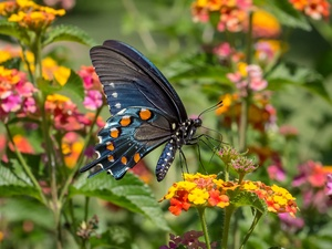 Flowers, butterfly, Old World Wwallowtail