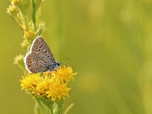 Flowers, Insect, Dusky, Yellow, butterfly