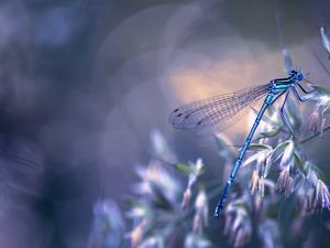 dragon-fly, Blue, The herb, Flowers, luminosity, Bokeh, sun, flash, ligh