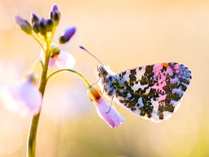 blur, Close, butterfly, Orange Tip, Colourfull Flowers