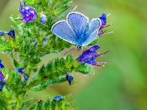 blue, Blossoming, plant, butterfly
